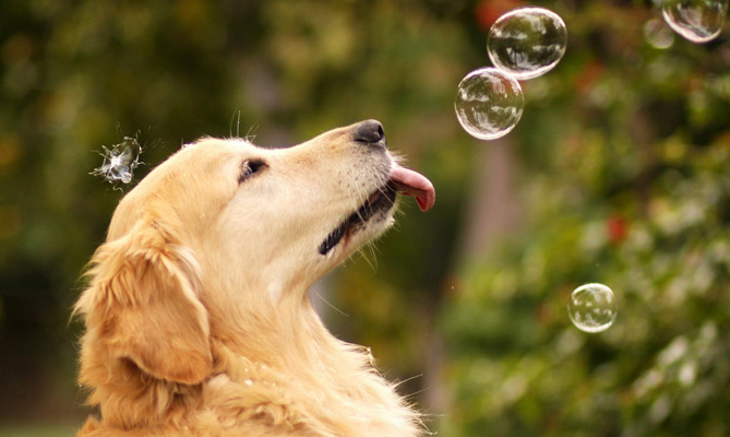 DogBubbles
